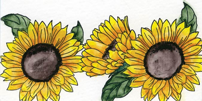 In every issue sunflowers